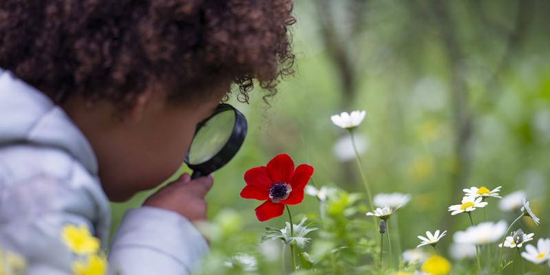 How Curiosity Changes The Brain?
