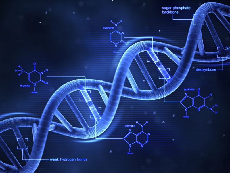 How Does DNA Store Genetic Information?
