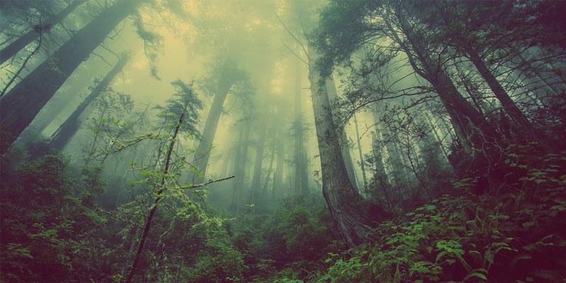 Humidity rainforest