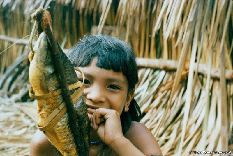Amazon rainforest food