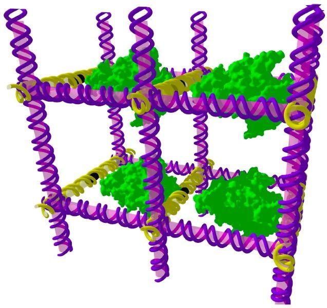 DNA lattice