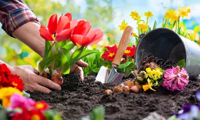 Science Behind How Having a Garden is Linked With Better Health?