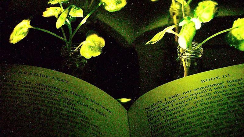 Watercress glowing