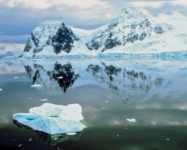 7 Rare Species Found in Marine Life Around Antarctica
