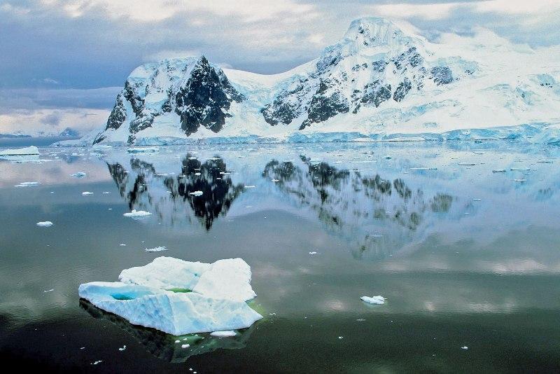Antarctica animals cover