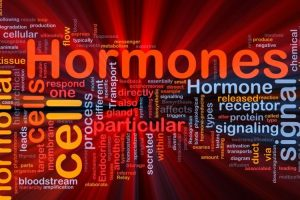 Types of Hormones Human Brain Releases