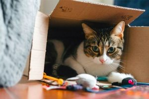 Why Cats Love Boxes So Much?