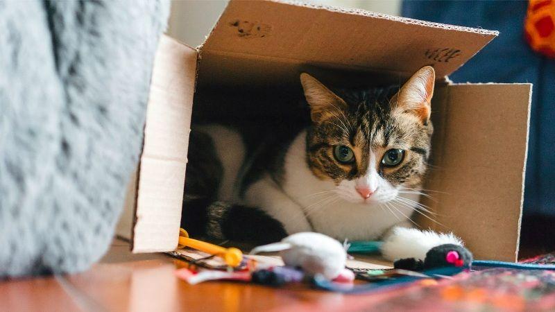 Cat box love cover