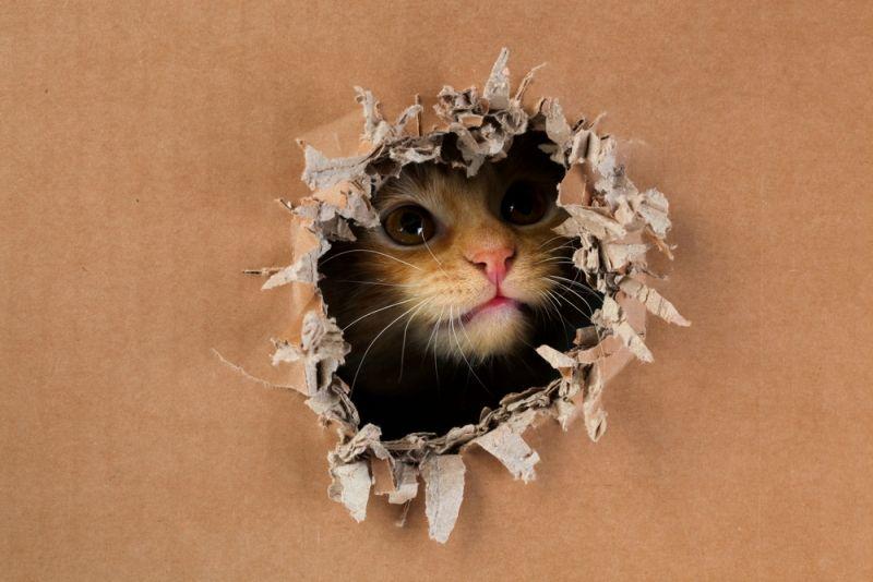 Cat chew cardboard