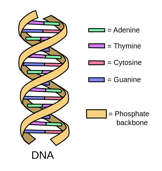 DNA alphabets