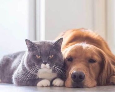 Why Dogs Are Smarter Than Cats (According to Science)