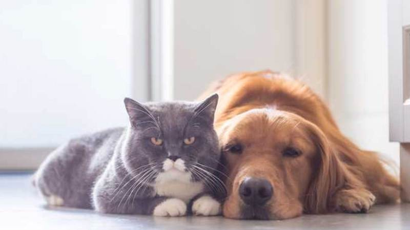 Dog smarter than cat cover
