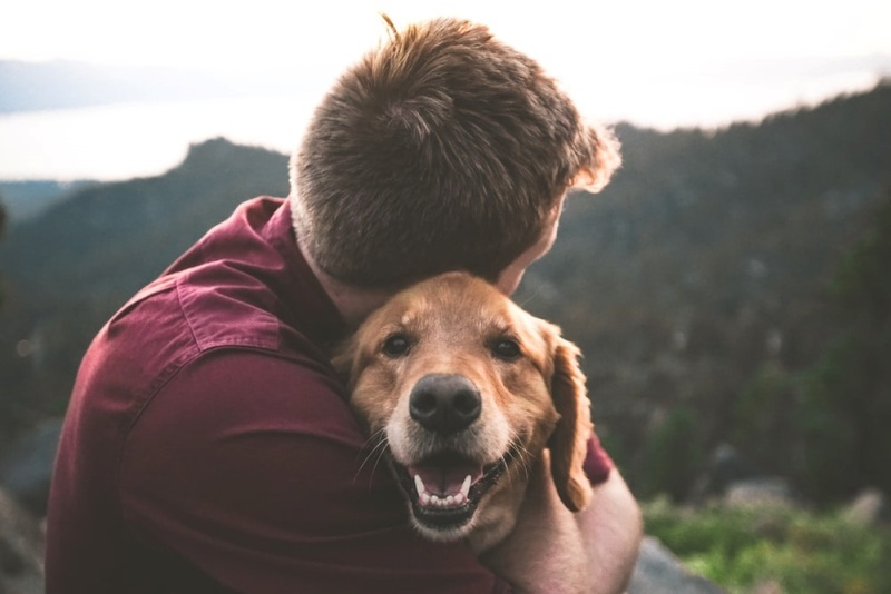 Science Behind Why Dogs Love Their Owners