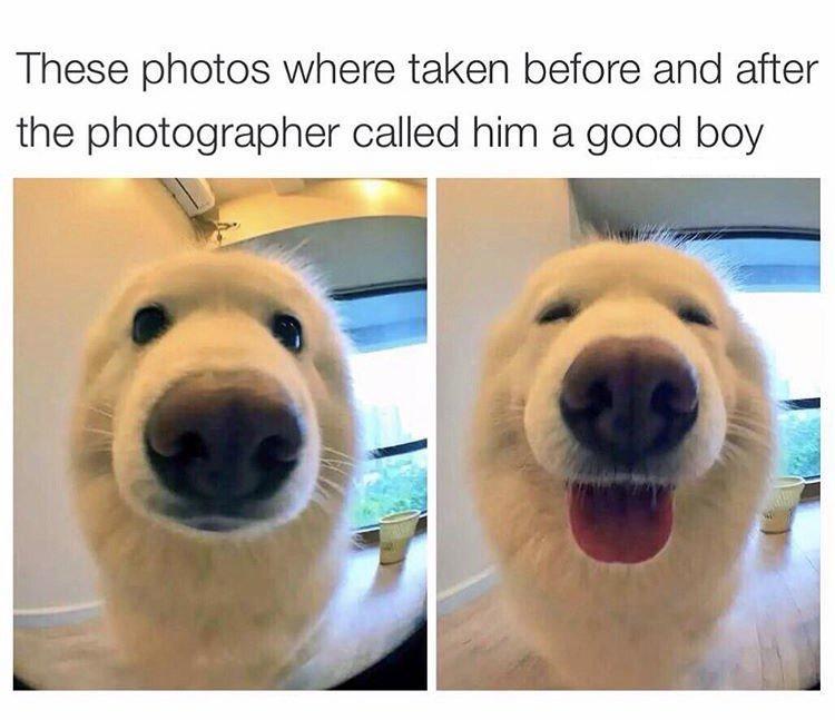 Good boy love