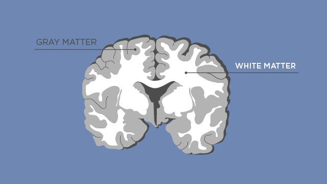 Gray matter and white matter language