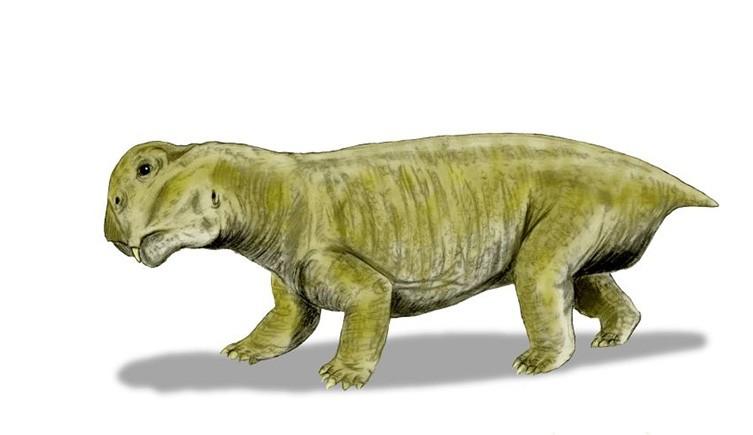 Lystrosaurus mammal