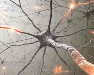 Why the Membrane of Neuron is Polarised?