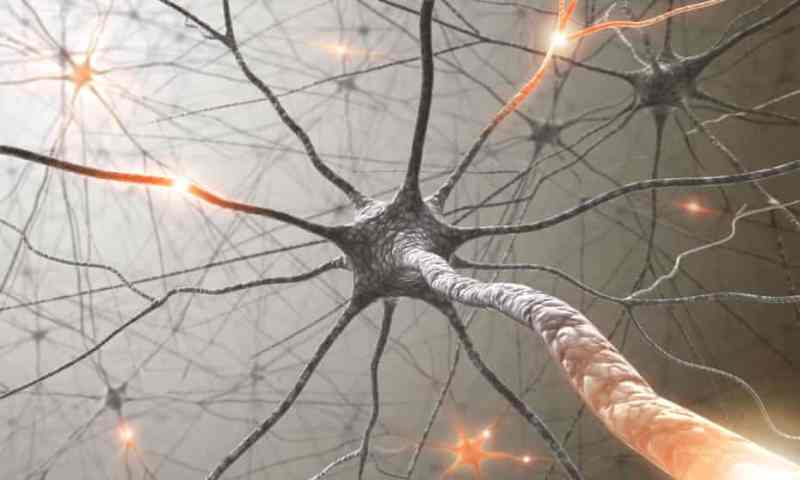 Neuron polarized cover