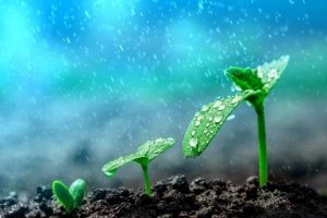 Why Plants Panic When It Rains?