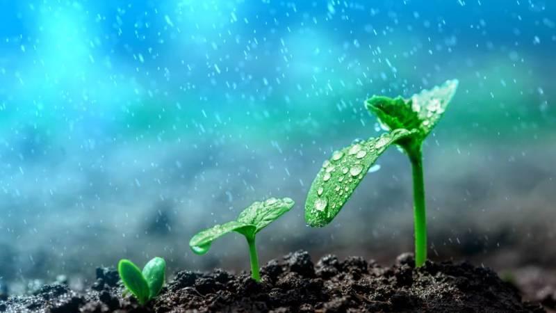Plant rain panic cover