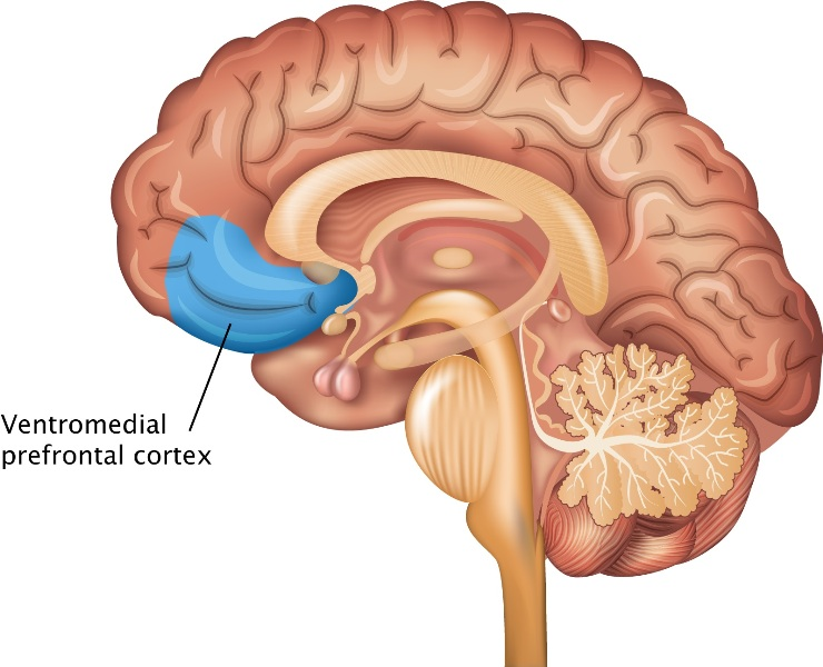 Prefrontal cortex language