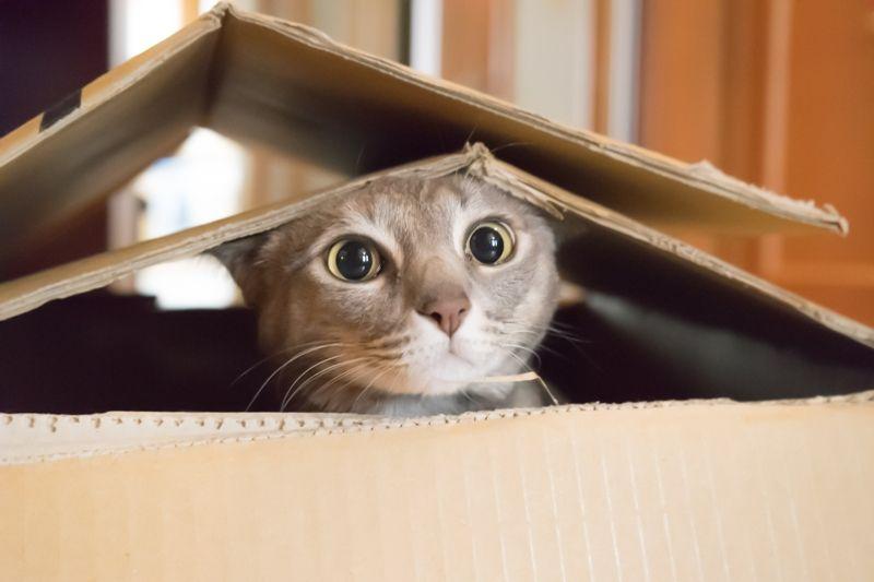 Safety cat box